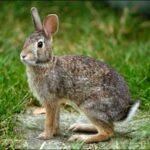 Rabbit-Picture