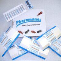 Pheromone Traps & Attractants